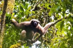 Cientistas descobrem nova espécie de macacos: os Skywalkers